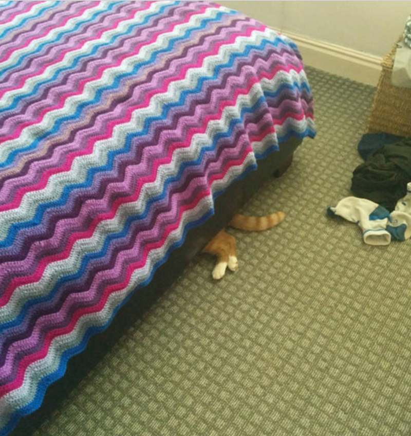 Cat hiding under the bed with his feet and tail sticking out.