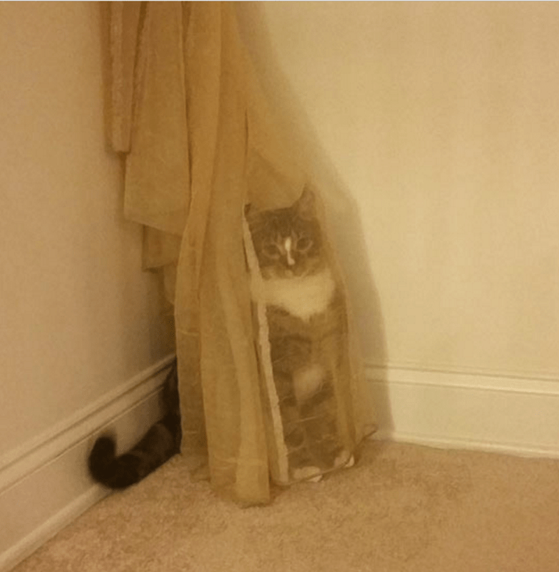 Cat doing a bad job of hiding amongst the curtains.