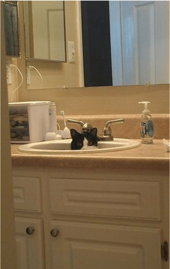 cat hiding inside the bathroom sink