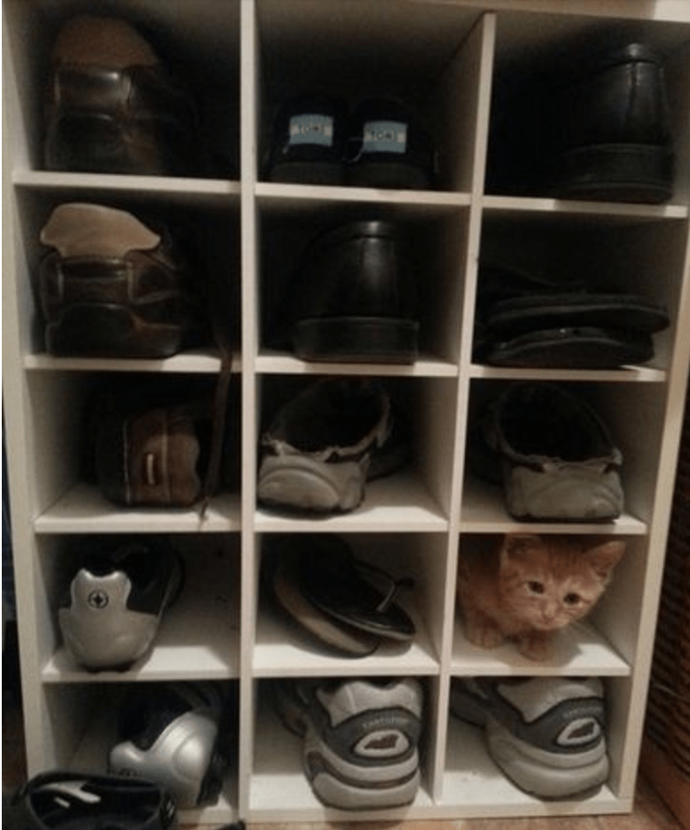 Cat hiding among all the shoes