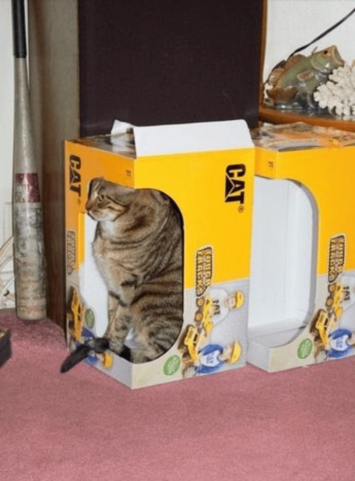 Cat inside a CAT box.