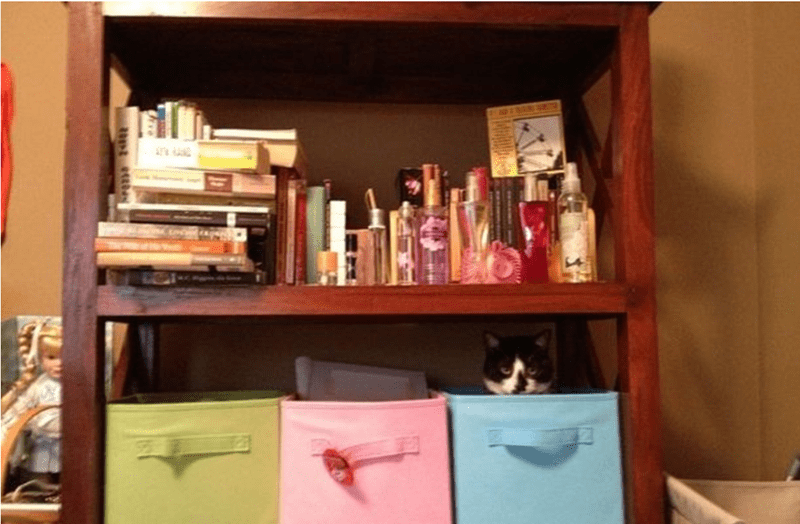cat hiding in the boxes in the bookcase.