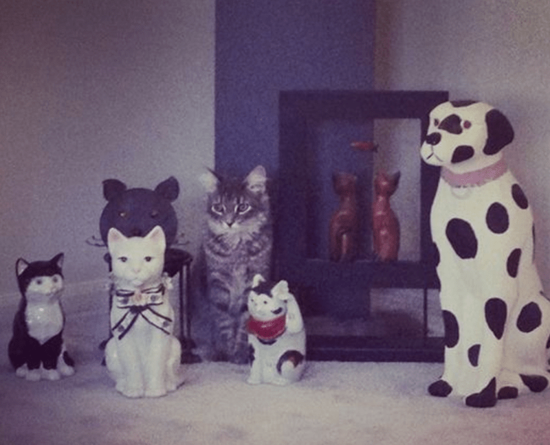 Cat camouflaged among the animal statues.