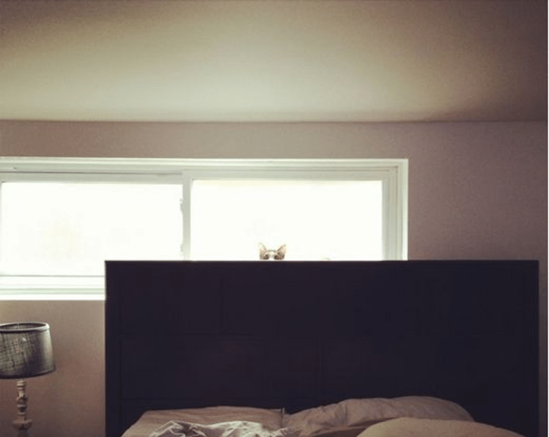 Cat behind the bed.