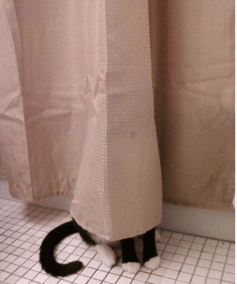 Cat in the curtains