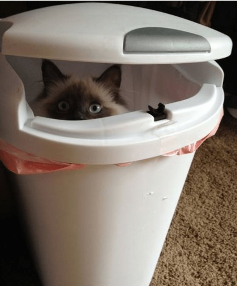 Cat hiding in the garbage can