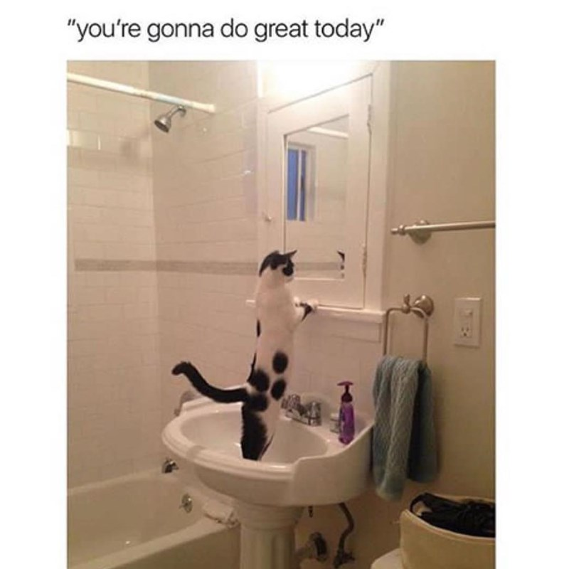 "Funny meme of a cat looking in the mirror, text says ""you're going to do great today."""