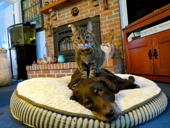 Cat forcing a massage on the dog.