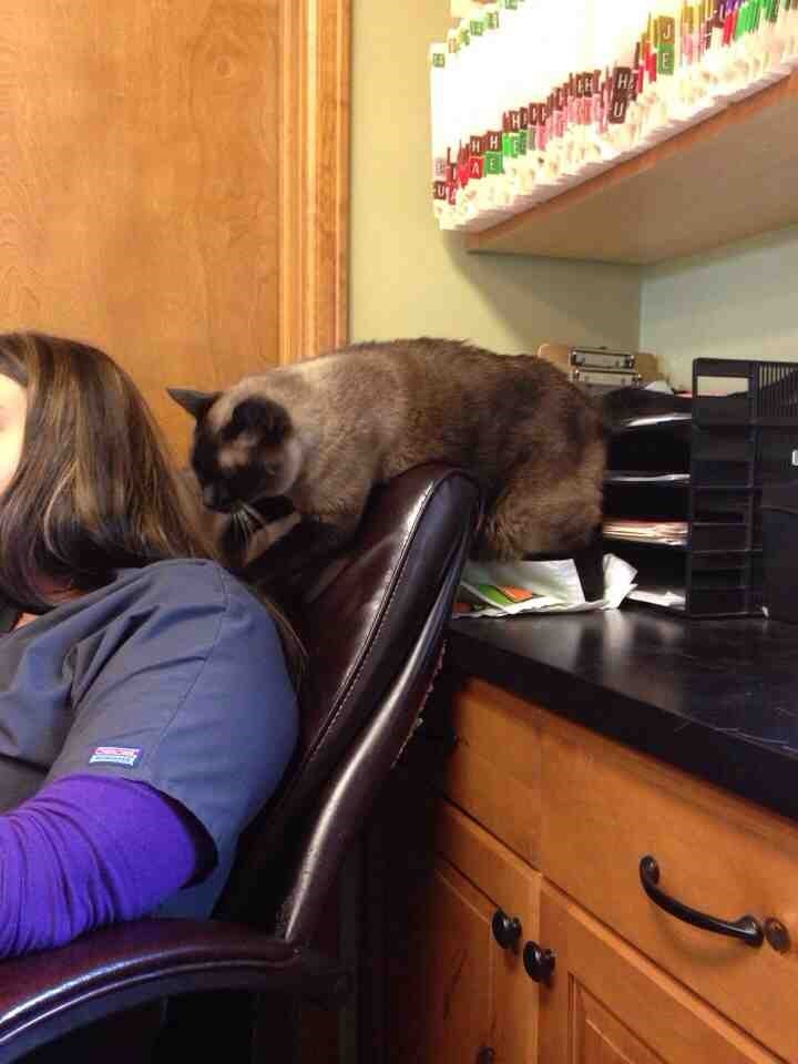Cat giving his hard working human a massage