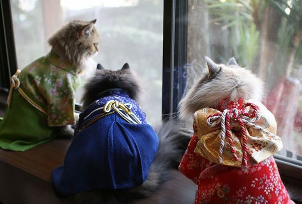 Authentic geisha cats