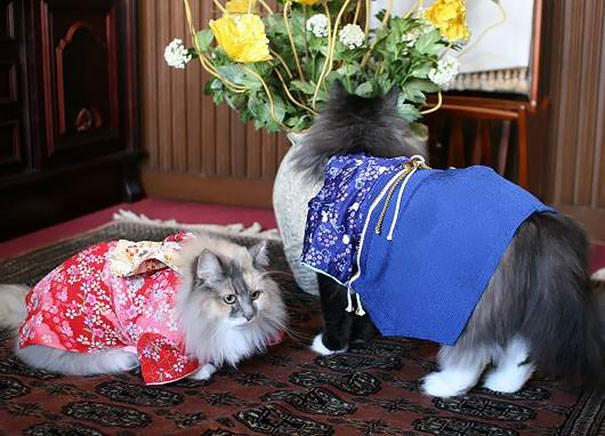 These cats are also interested in participating in the Japanese dress up game
