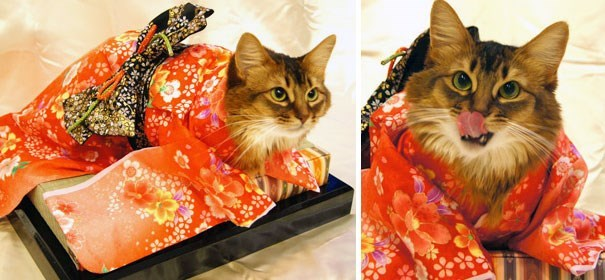 cat licking chops dressed in red kimono