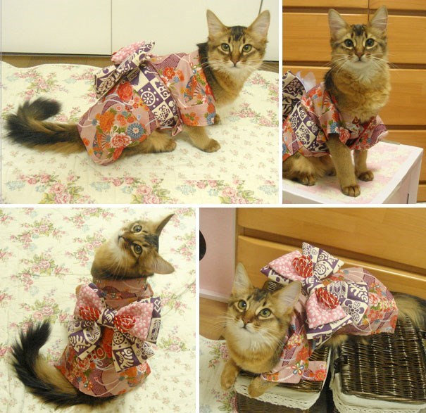 4 picture collage of cat in pink bow kimono