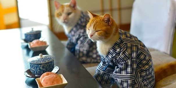very wise cat wearing kimono ready to enjoy some breakfast