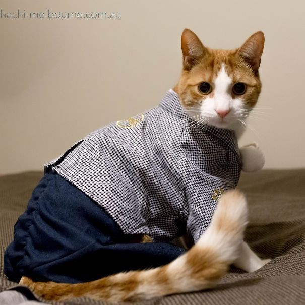 Japanese factory worker cat.