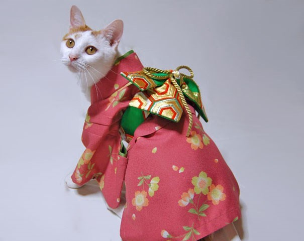 Geisha cat pink and green looking over shoulder.