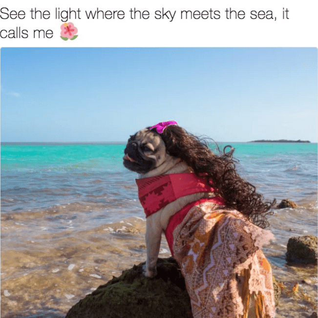 Tweet of funny dog that looks like a mermaid ready for the sea life.