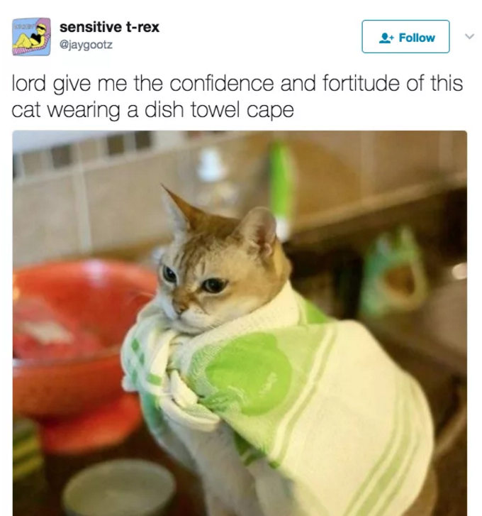 Tweet of a very confident cat wearing a dish towel cape.