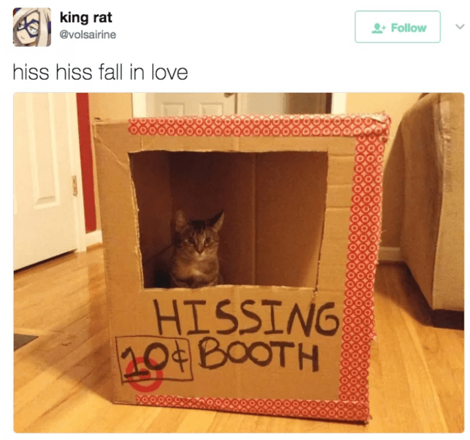 Cat in a hissing booth