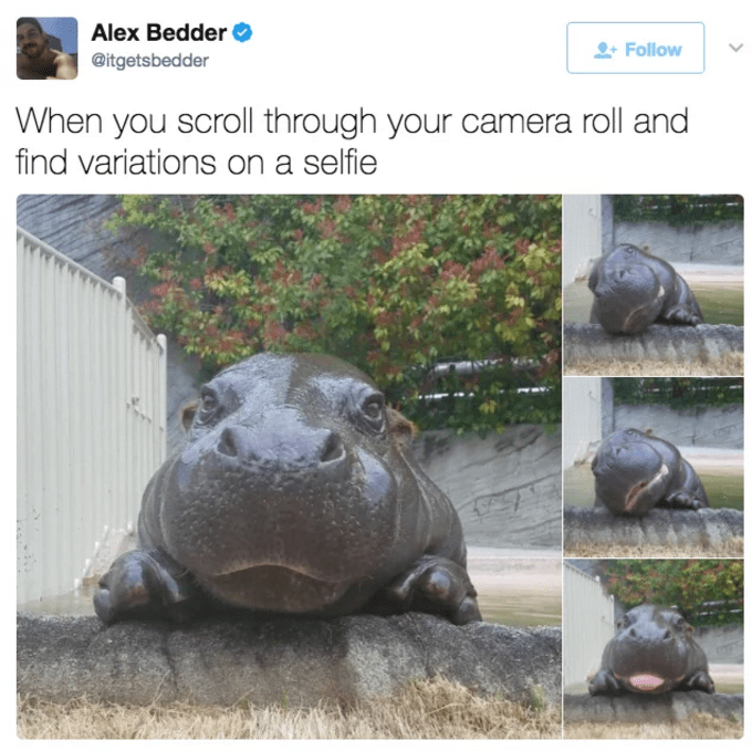 Tweet of funny hippo that has variations of the same selfie.