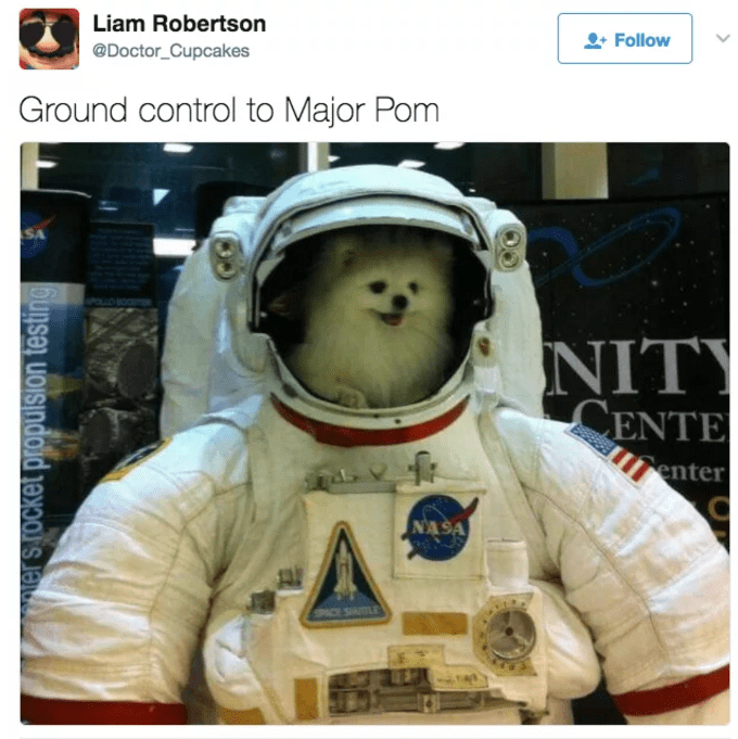 Dog in the helmet of a NASA spacesuit.