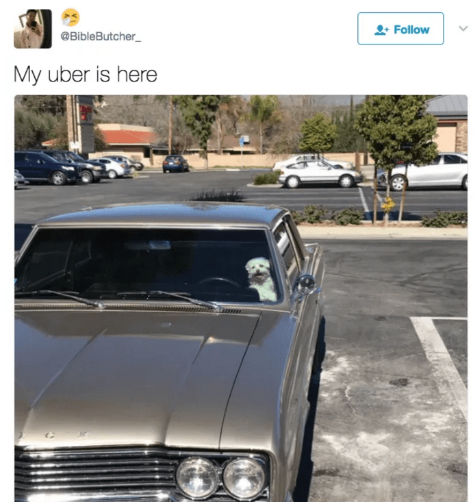 "Tweet of a dog behind the wheel of a car with joking caption that ""my uber is here"""
