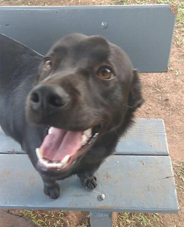 Lana the smiling dog.