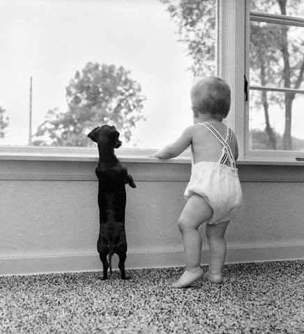 Black and white pic of baby with suspenders and dog standing by the window looking out.