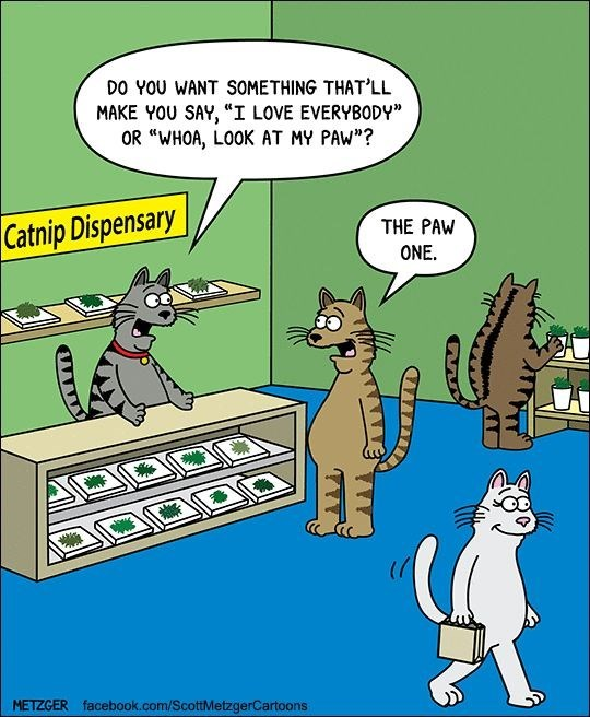 Scott Metzger cartoon about the catnip dispensary