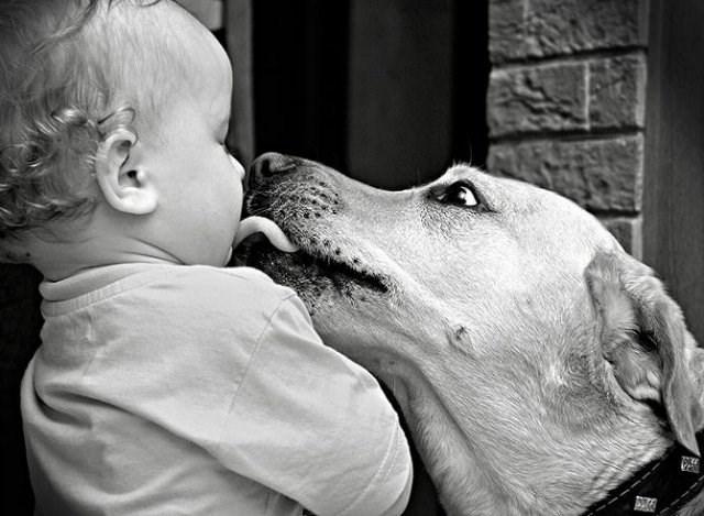 Dog licking a kids face.