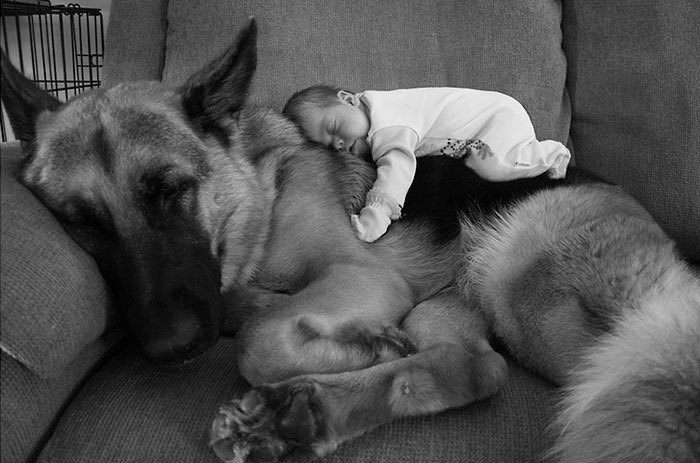 Tiny new born baby on a cuddly looking dog.