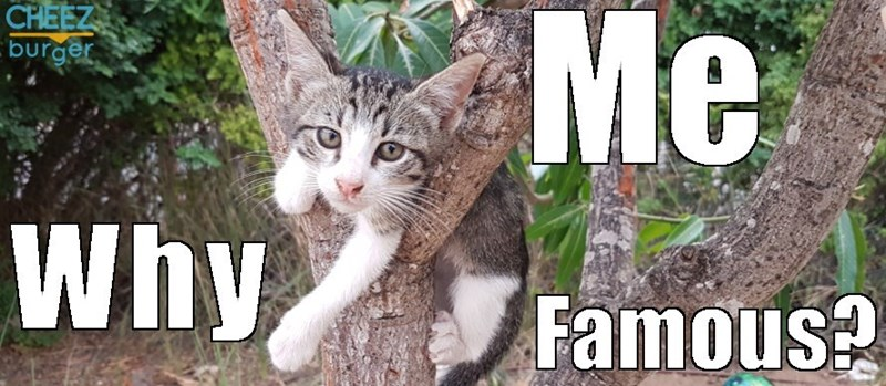 What are cats so popular on the internet - header image