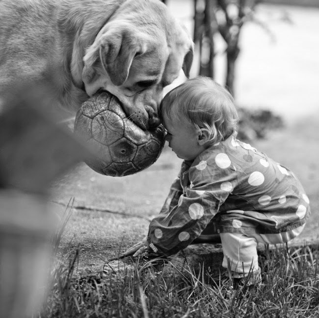 Black and white - Dog with ball in his mouth and kid playing
