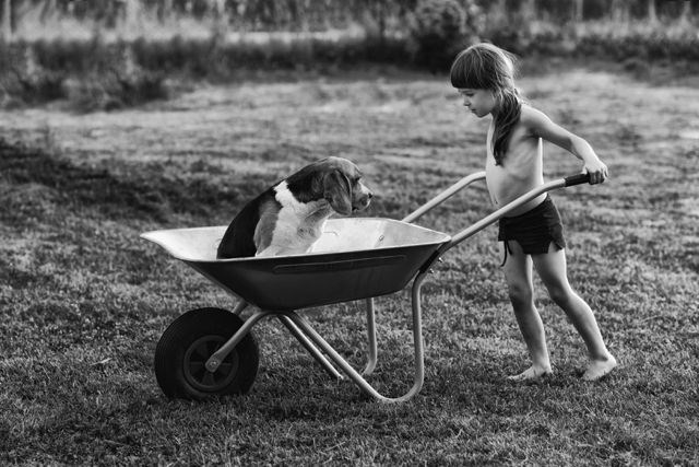 Girl pushing dog in wheel barrow