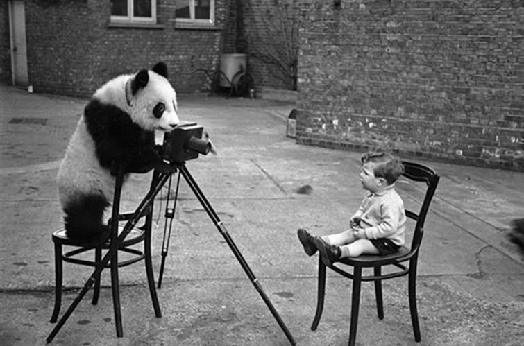 Panda taking a kid's picture with an old-school camera