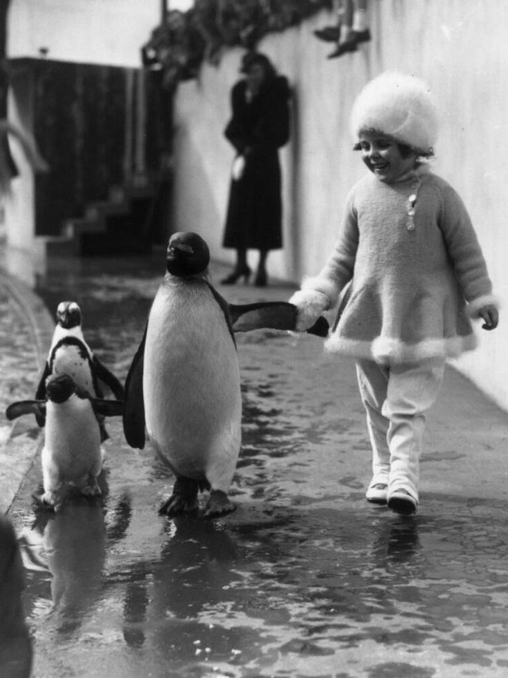 Girl walking holding penguins arm and also baby penguins.