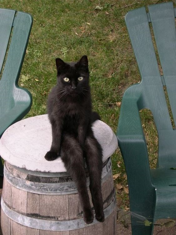 Black cat sitting like a person on a barrel, with his feet dangling.