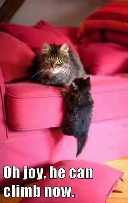 a funny picture of a older cat sitting on a very bright pink couch and a kitten climbing up and the cat looking annoying that the kitten can now climb