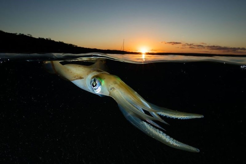 Squid and sunset.