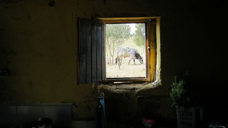Open window with a hyena outside perfectly framed.