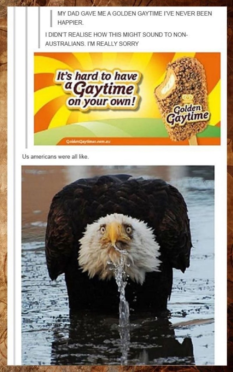 Bald eagle - MY DAD GAVE ME A GOLDEN GAYTIME I'VE NEVER BEEN HAPPIER. I DIDN'T REALISE HOW THIS MIGHT SOUND TO NON- AUSTRALIANS. I'M REALLY SORRY It's hard to have aGaytime on your own! Golden Gaytime Goldengeytimes.com.au Us americans were all like.