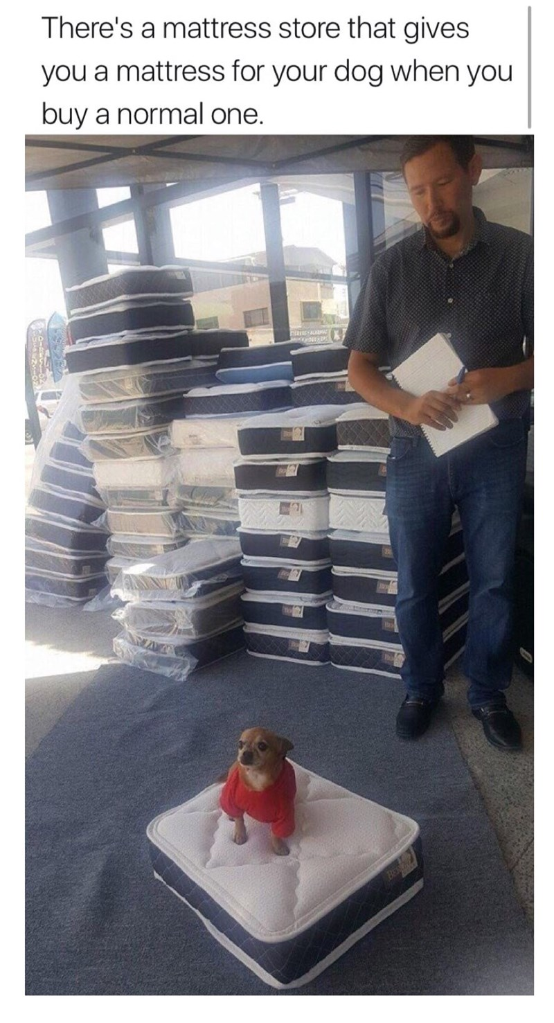 Table - There's a mattress store that gives you a mattress for your dog when you buy a normal one.