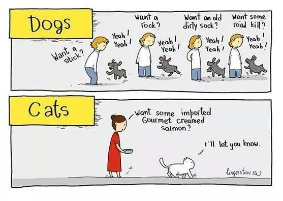 comics showing the difference between cats and dogs