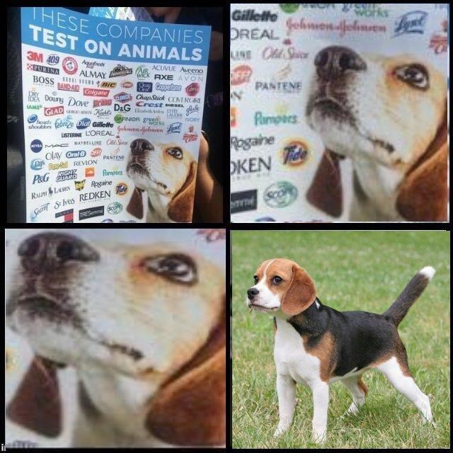 Zooming in dank meme about companies that test on animals