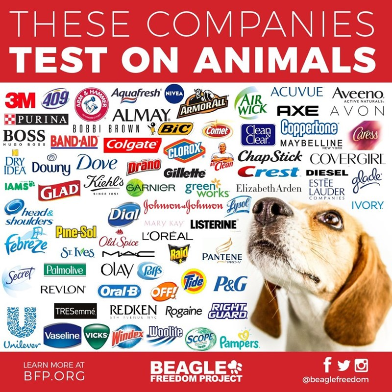 The original graphic warning which brands test on animals, from which the dank memes emerged.