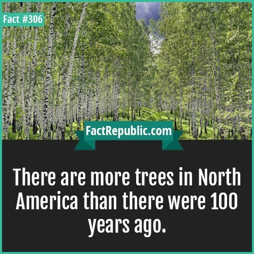 Vegetation - Fact #306 FactRepublic.com There are more trees in North America than there were 100 years ago.