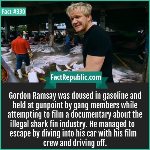 Photo caption - Fact #330 FactRepublic.com Gordon Ramsay was doused in gasoline and held at gunpoint by gang members while attempting to film a documentary about the ilegal shark fin industry. He managed to escape by diving into his car with his film crew and driving off.