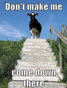 Goats - Don't make me Come down there