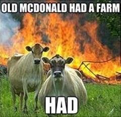 Bovine - OLD MCDONALD HADA FARM HAD