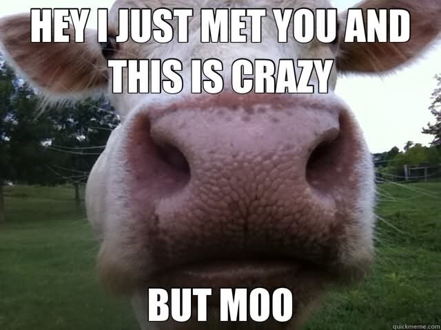 Photo caption - HEYIJUST MET YOU AND THIS IS CRAZY BUT MOO quickmeme.com
